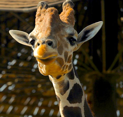 Montgomery Zoo | Fun Things To Do in Alabama | Montgomery Alabama