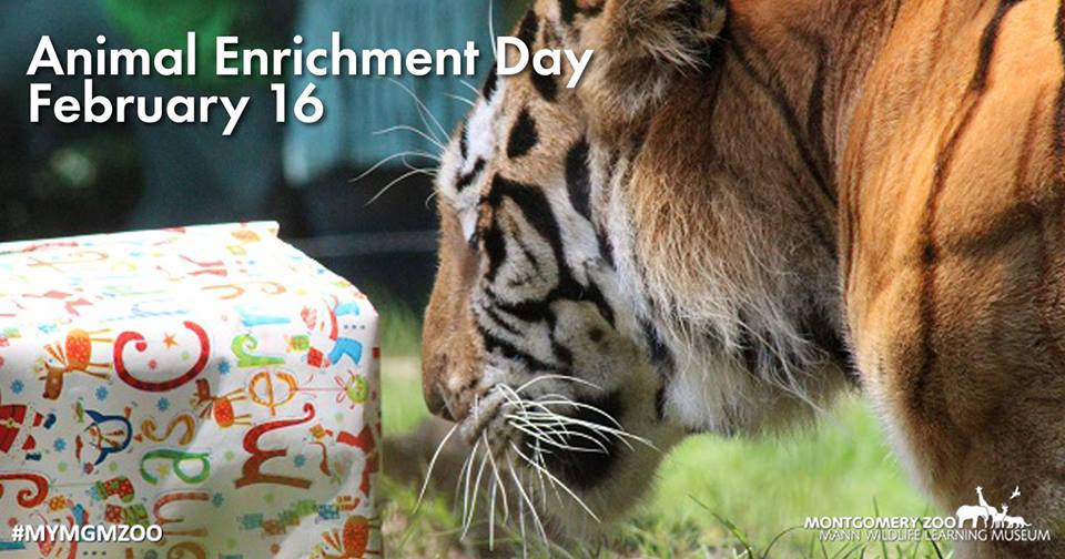 Animal Enrichment Day