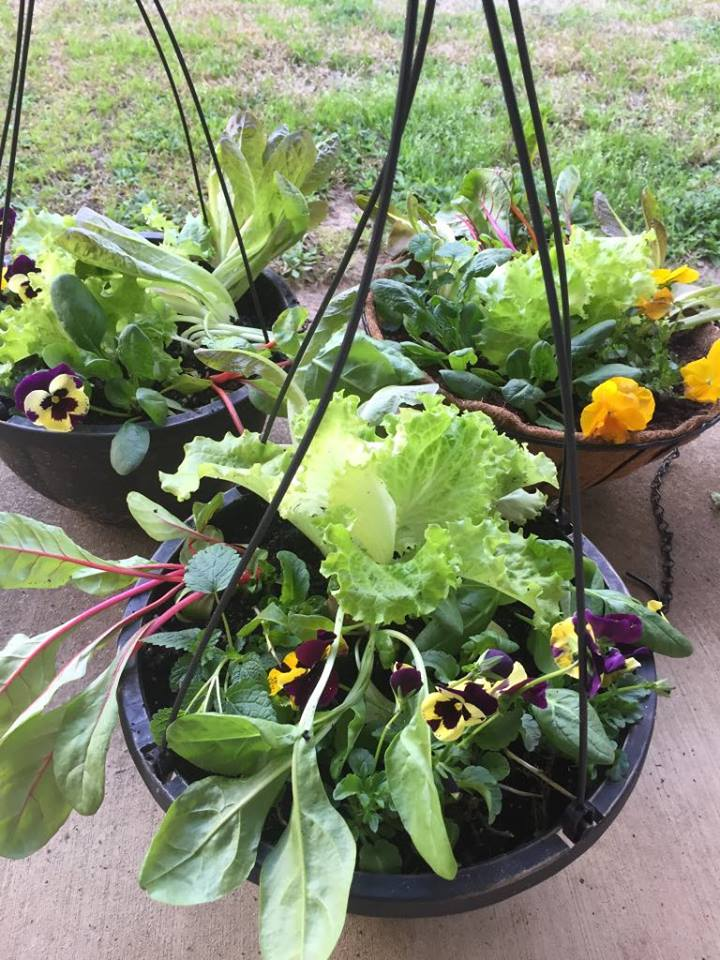 Edible Salad Container Gardens with Rachel Dickinson